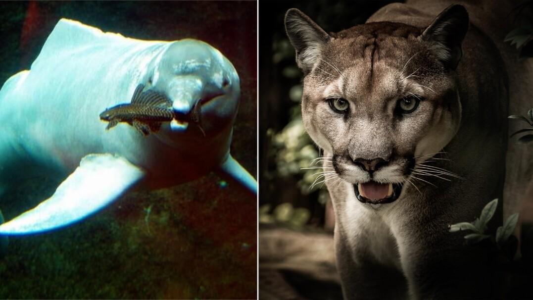 Te gatunki wyginęły za naszego życia. Już ich nie zobaczymy