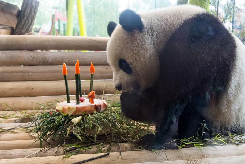 Czwarte urodziny Meng Meng (zoo w Berlinie)