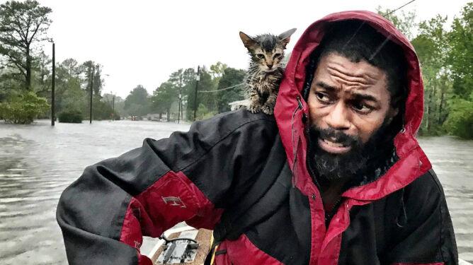 Ratując się, nie zapomniał o kocie. <br />Huraganowe historie