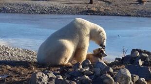 Niedźwiedź i pies na niezwykłym nagraniu. Widok, który wzruszył internautów