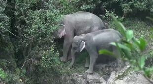 Dwójka słoni przeżyła